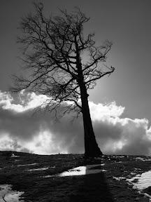 Muntii Cernei. Copacul singuratic.