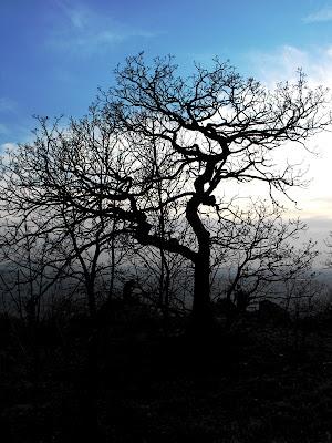 Macin. Copacul singuratic