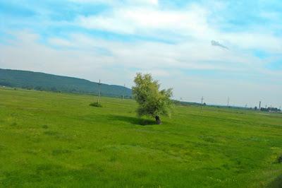 campia - copacul - cerul