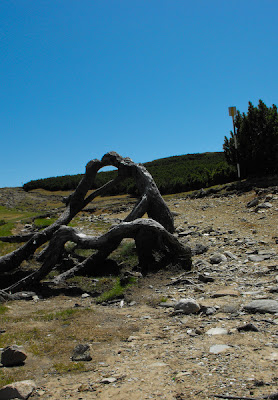 Muntii Bucegi - Sarutul - peisaj de munte cu lemn si piatra