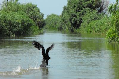 Delta Dunarii. Canalul Dunavat