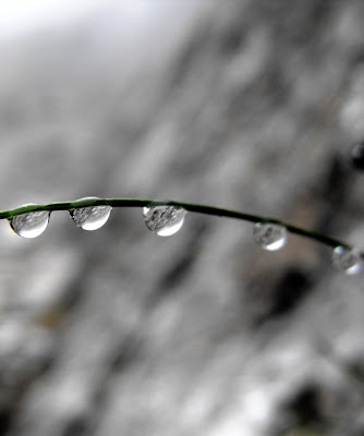 macro: picaturi de ploaie pe un fir de iarba