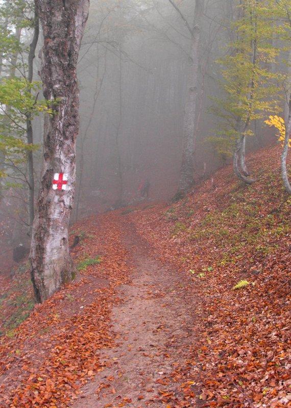 Muntii Trascaului. Padure in ceata. Padure de poveste