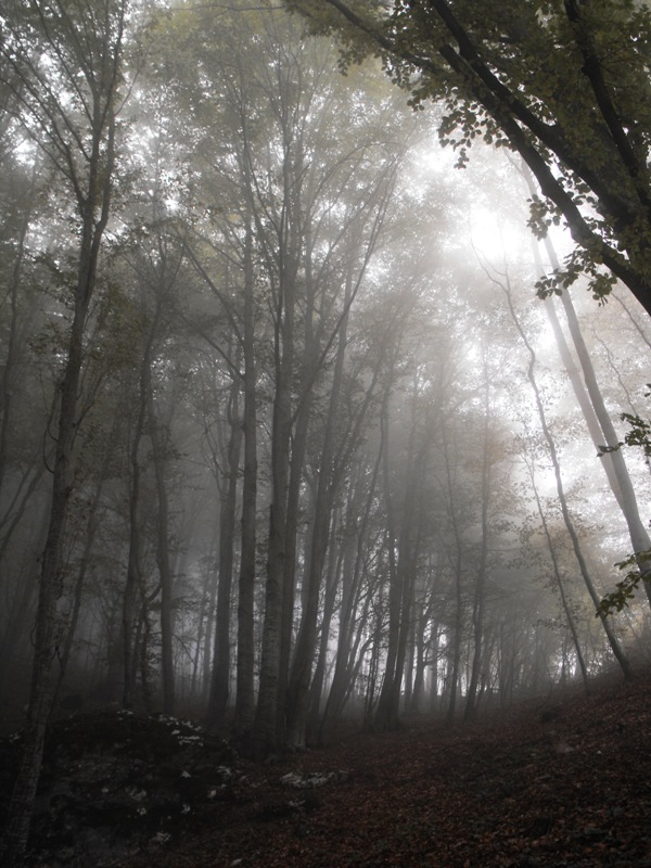 Muntii Trascaului. Padurea vrajita
