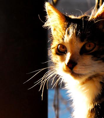 viata la tara. pisica