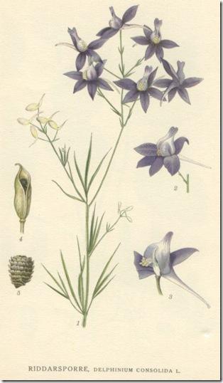 178Bild ur Nordens Flora