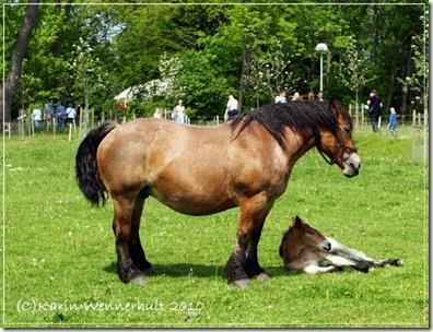 Hästmföl