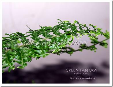 GreenFantasySgn