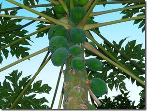 frucht4