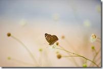 butterflyj