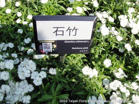 2010 花博 - 石竹