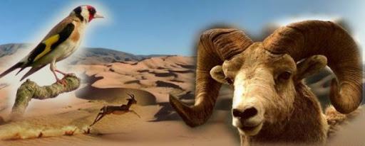 حيوانات الجزائر البرية