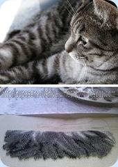 Бисерный котик на 22.03.11г.