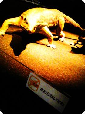dinosaurs 013
