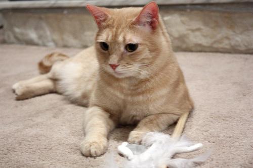 Kitties And Doggies. Stay safe, kitties and doggies