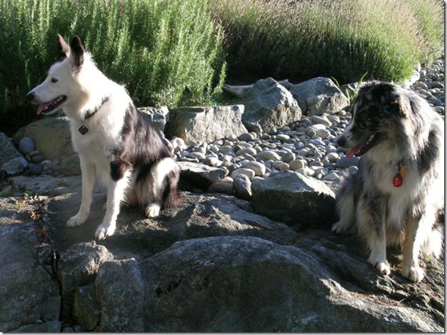 Mojo and Stella