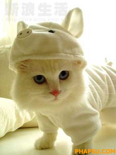 cat_clothes_640_17.jpg