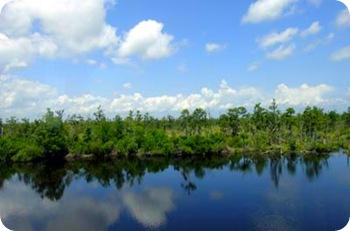 swamp-area-7