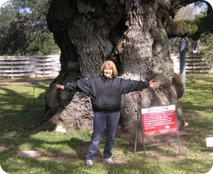 big-tree-branch-marsha-arms