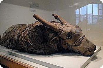 bull-mummy
