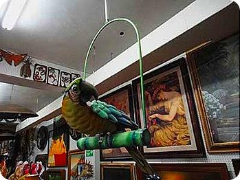 8-parrot