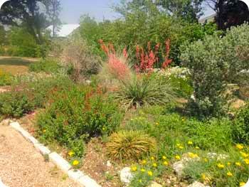 19-garden