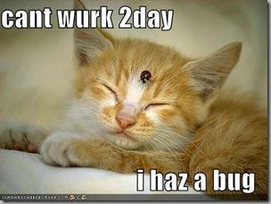 Sick cat2