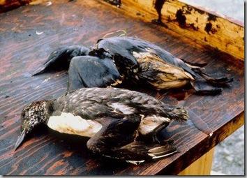 Dead herons
