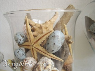 Sea star in vase