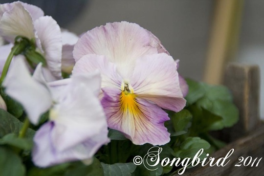 Garden Spring 2