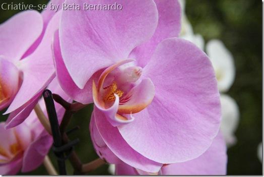 orquidea (1 of 2)