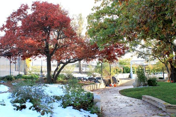 treesgarden