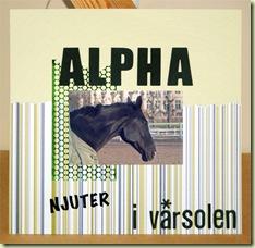 Alpha njuter i vårsolen_stor