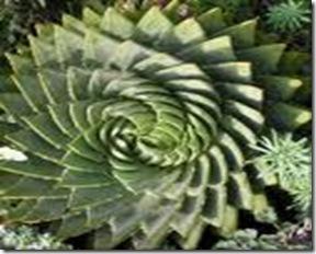 spiral9