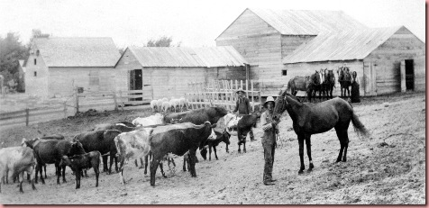milo flanders on farm with cattle