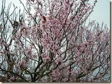 Just plum pink