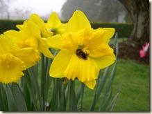 Bumble bee brrr