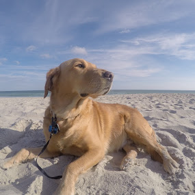 Beach Girl  by Isabelle Largen - Animals - Dogs Portraits