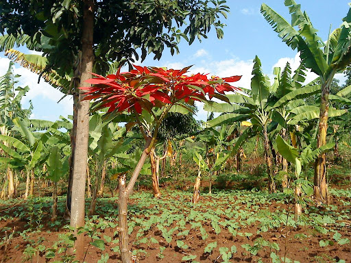 5 min von meinem Haus aus hinter den Hügel wandern und man ist in der Natur außerhalb Kigalis