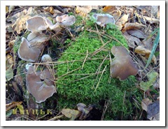 Закінчуємо з мохом, дивимося на гриби.