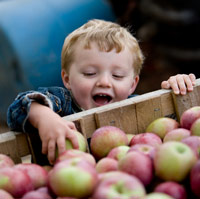 gyermeki öröm, almák