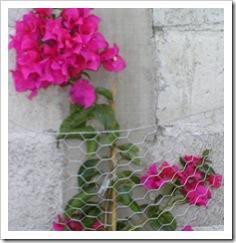 Bodega, dogs, lavadero, flowers 017-1