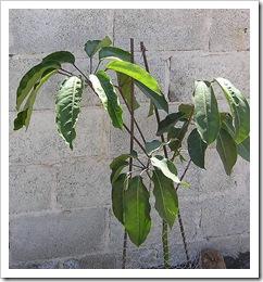 Plants & boug 012-1