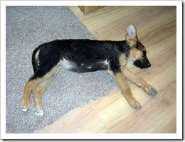 Tasha 3 weeks after being found 003-1