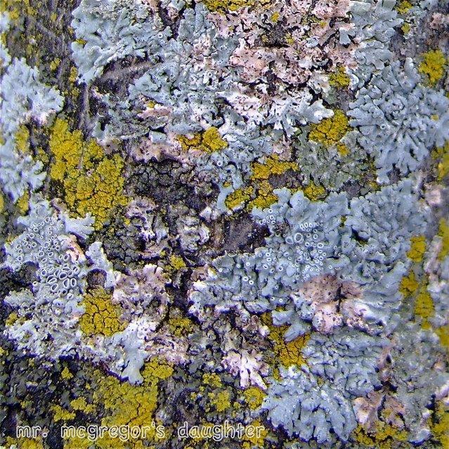 Arctic Tundra Lichen T...
