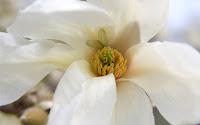 52/18: Magnolia et al.