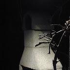 Kradrostado la unuan vesperon