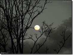 Noite enluarada (clique para ampliar)