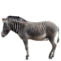 Zebra Sticker icon