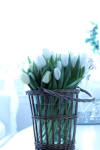 Nydelige tulipaner2